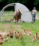 Moving the Broiler house