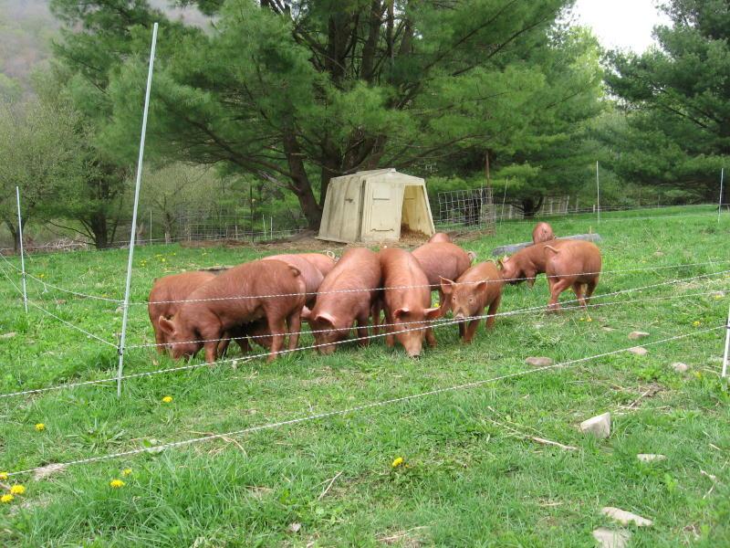 pig farming business plan sample