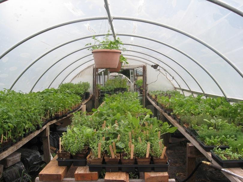 Propagation greenhouse