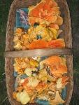 Chanterelles & Chicken of the Woods