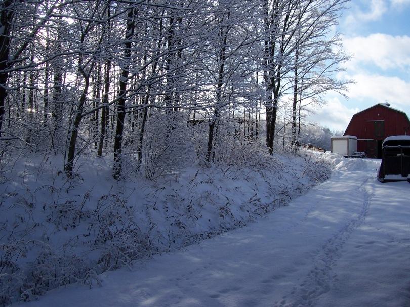 Winter on the lane