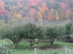 The orchard in fall