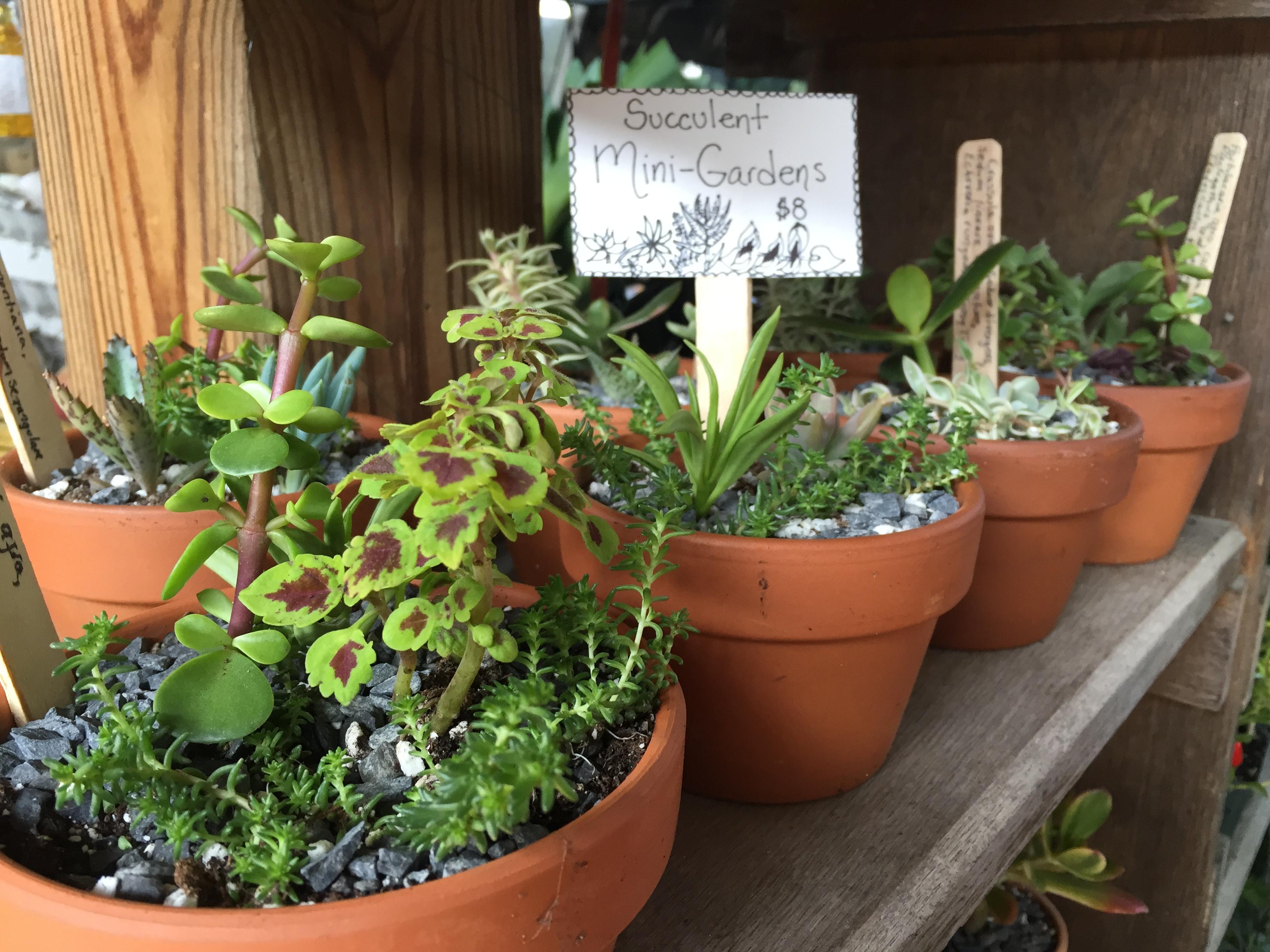 houseplants richford new york